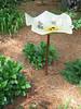 Rita Bigham's garden - birdbath