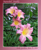 06292003 'Bejeweled' Daylily [gradient borders, text]