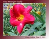 06292003 'Fiery Messenger' [gradient borders, text]