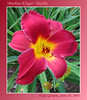 06292003 'Mathias Kluger' Daylily [gradient borders, text]