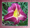 06292003 'Siamese Royalty' Daylily [gradient border, text]