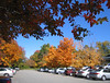 11032006 Fall foliage in parking lot