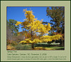 11032006 Ginkgo Biloba (Gingko) [borders, text]