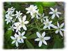 04182004 Small white flowers [edgefade10 frame]