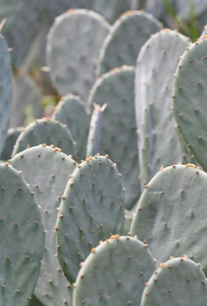 09212007 Cacti