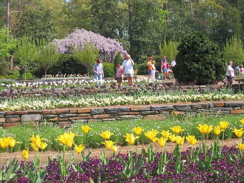 04182004 Tulips and wisteria, terrace garden 2
