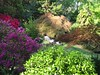 04202003 Reader in the midst of azaleas and maples