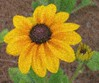 06292003 Black-eyed Susan - 1 fg, 1 bg [photomosaique]