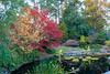 11092008 Lovely foliage around pond
