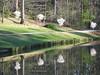 03222009 Reflections of white flowering trees in pond, Japanese Garden