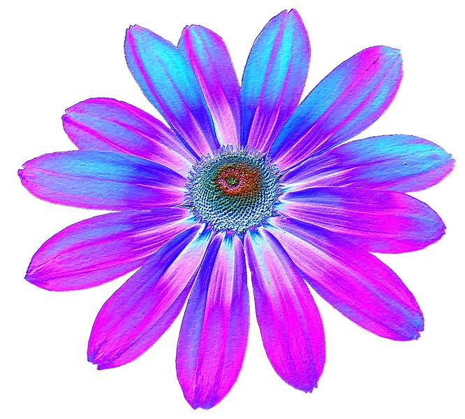 00aFavorite 06292003 Black-eyed Susan [colored foil, bg removed]