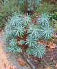 10222006 Foliage plant after rainfall