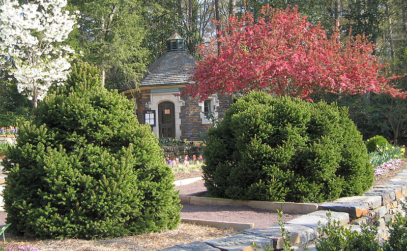 03292006 Dogwood and pink flowering trees (crabapples I think) by building