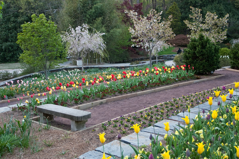 04092009 Tulips and pond