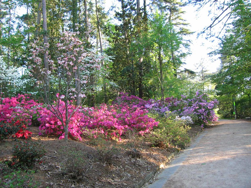 04252005 Azaleas and dogwoods in full blown