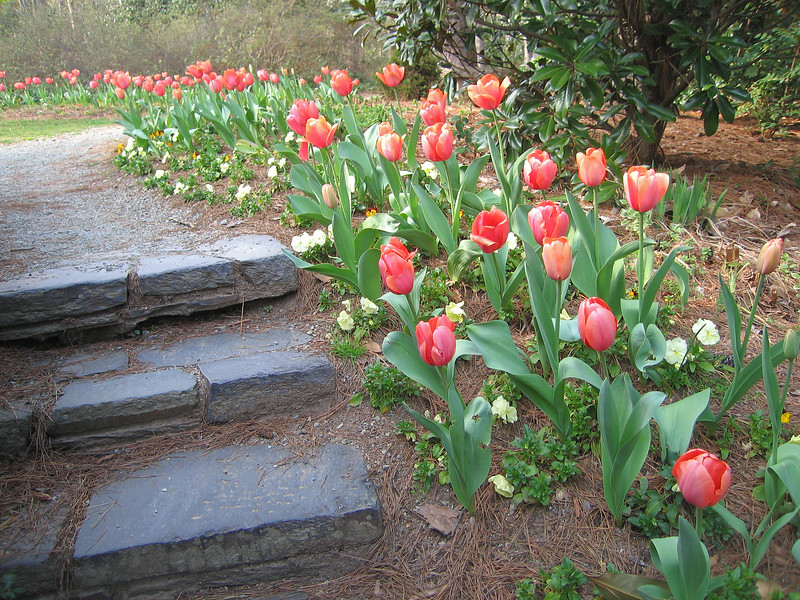 03222007 Stairway behind pond leading past blooming tulips 2