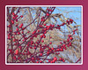 00aFavorite 12292003 Red berries cl [colored edges, borders]