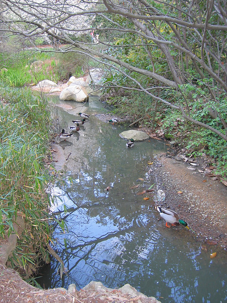 03292006 Ducks near pond and stone bridge