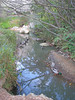 03292006 Ducks near pond and stone bridge