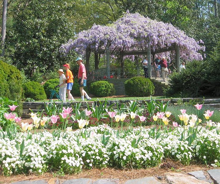 04182004 Tulips and wisteria, terrace garden