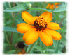 00aFavorite 08022006 Bed of orange flowers cl [cropped very close, edgefade10 frame]