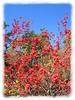 11032006 Berries [edgefade10 frame]