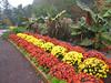 10252006 Row of plants