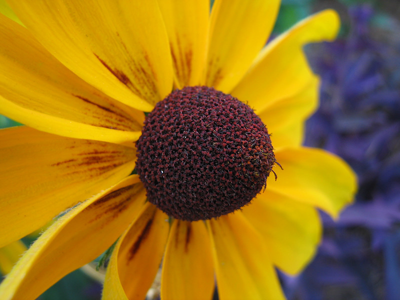 00aFavorite 08022006 A yellow flower cl