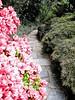 04212006 Hogarth-S path in rock garden by pond 2 [Sheri's Sketch - Kent Mix]