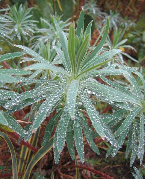 10222006 Foliage after rainfall