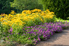 07132008 Yellow and purple flowers, terraces (543p)