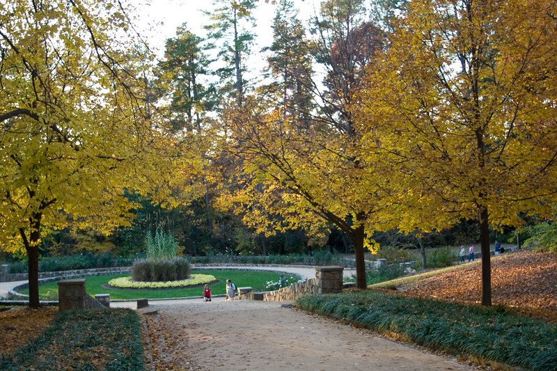 11092008 Pathway to roses with yellow fall foliage