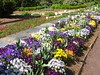 04202003 Pansies and tulips