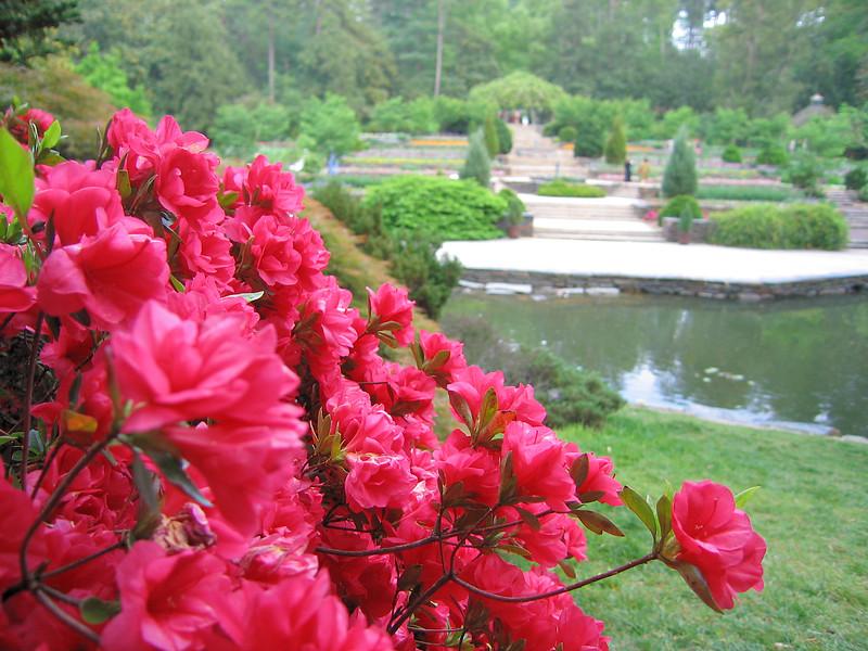 00aFavorite 04212006 Peeking from behind pond past azaleas toward terrace garden and pergola