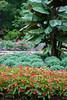 00aFavorite 09212007 Central area of rose beds