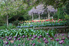 04092009 Tulips and wisteria-covered gazebo