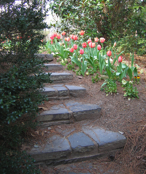 03222007 Stairway behind pond leading past blooming tulips