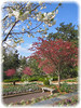 03292006 Flowering trees, terrace gardens [borderfade4]