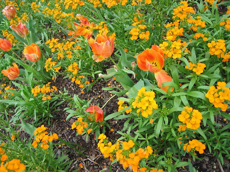 04212006 Orange flowers