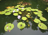 10222006 Water plants in pond