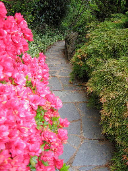00aFavorite 04212006 Hogarth-S path in rock garden by pond flanked by pink azaleas & maple