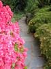 00aFavorite 04212006 Hogarth-S path in rock garden by pond flanked by pink azaleas & maple
