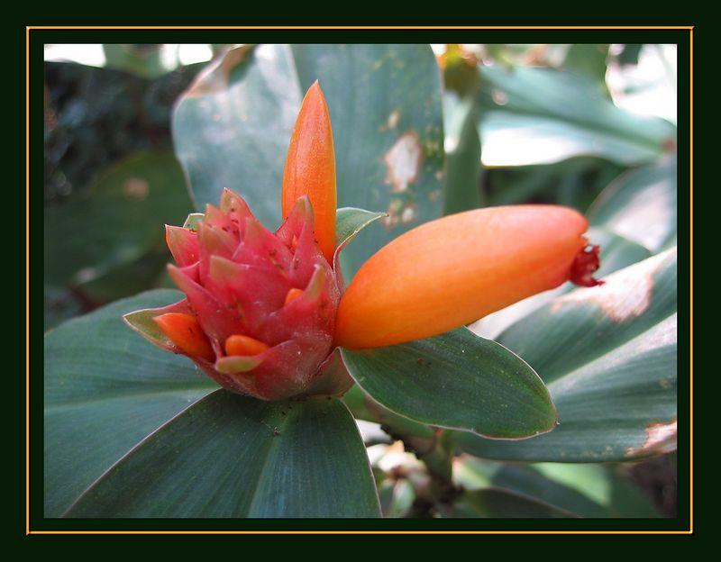 00aFavorite Pink and orange flower cl [borders]