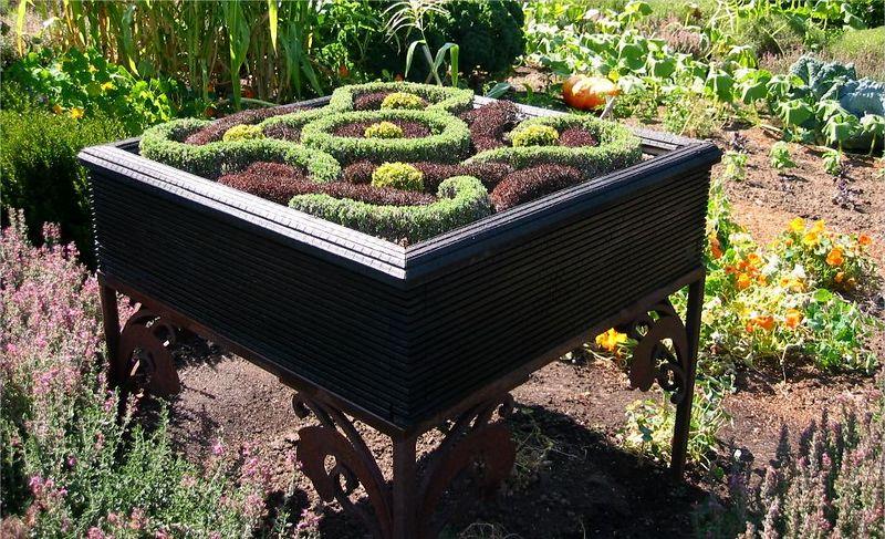 Mini knot garden2