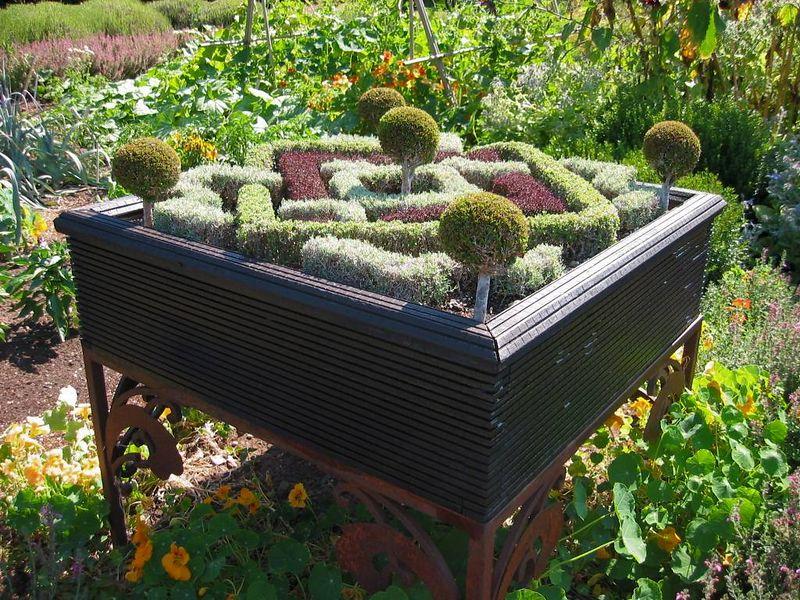 Mini knot garden1