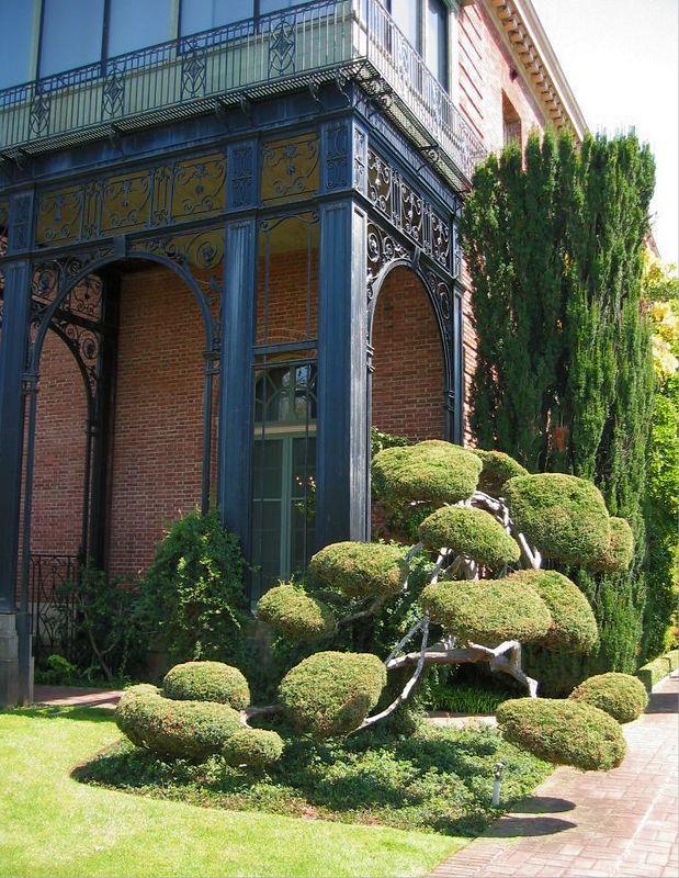 Bonsai shaped tree near structure