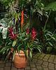 Franklin Park Conservatory (3 Tropical Rain Forest) - 20080328 (105p) 09525