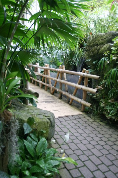Franklin Park Conservatory (3 Tropical Rain Forest) - 20080328 (109p) 09528