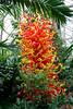 00aFavorite Franklin Park Conservatory (1 Pacific Island Water Garden) - 20080328 (1231p) 9485