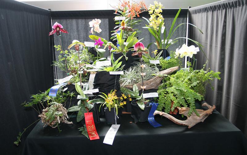 Franklin Park Conservatory (6 Grand Atrium [orchid show]) - 20080329 (1227p) 09982